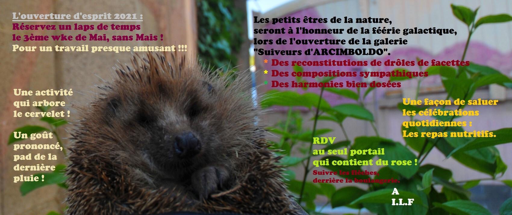 Les petits êtres de la nature invitent !