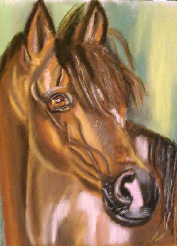 Coloriage t te de cheval profil - Image tete de cheval ...