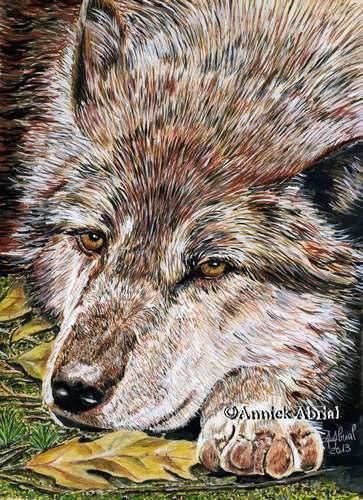 Le repos du loup