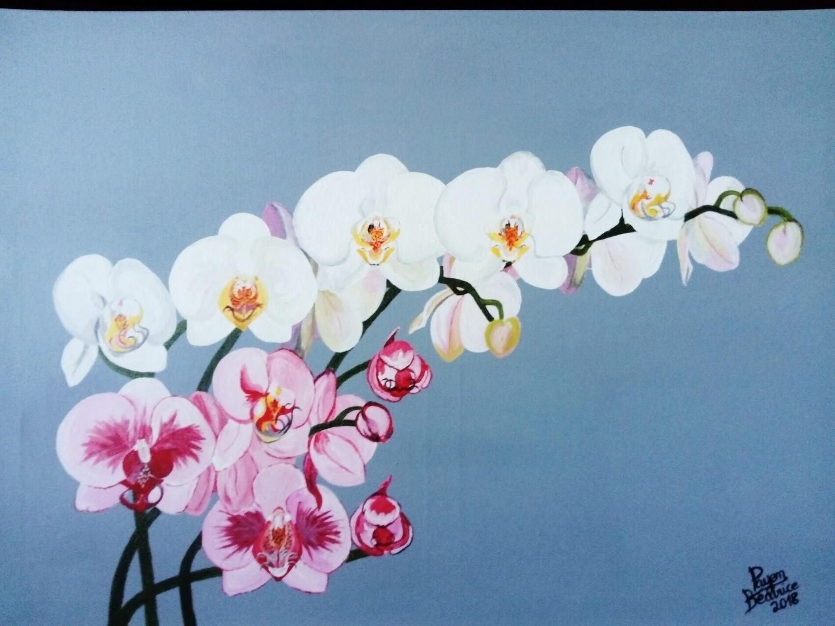 les orchidées