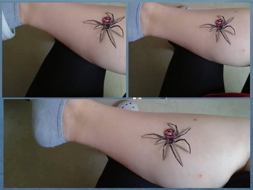 Araignée chatouilleuse