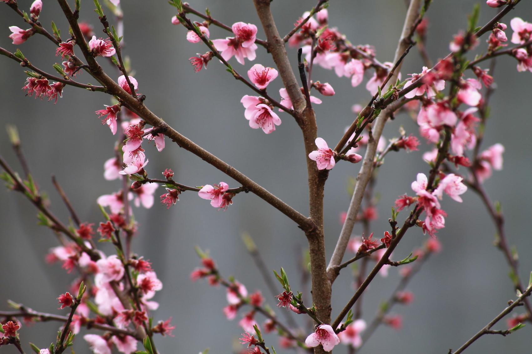 Enfin le printemps!
