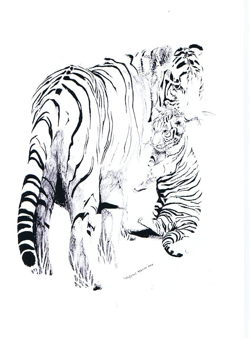 Dessin tigre n 2 - Image dessin tigre ...