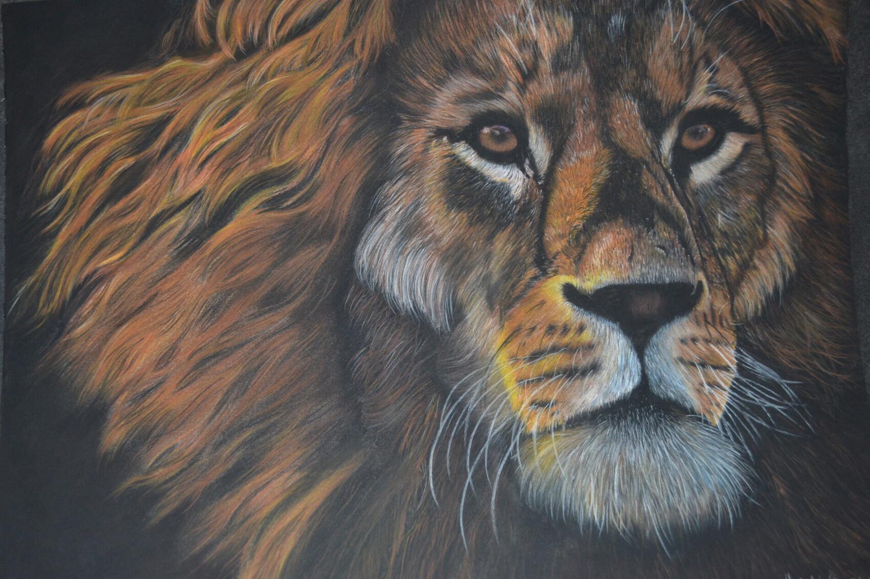 Lion aux pastels secs