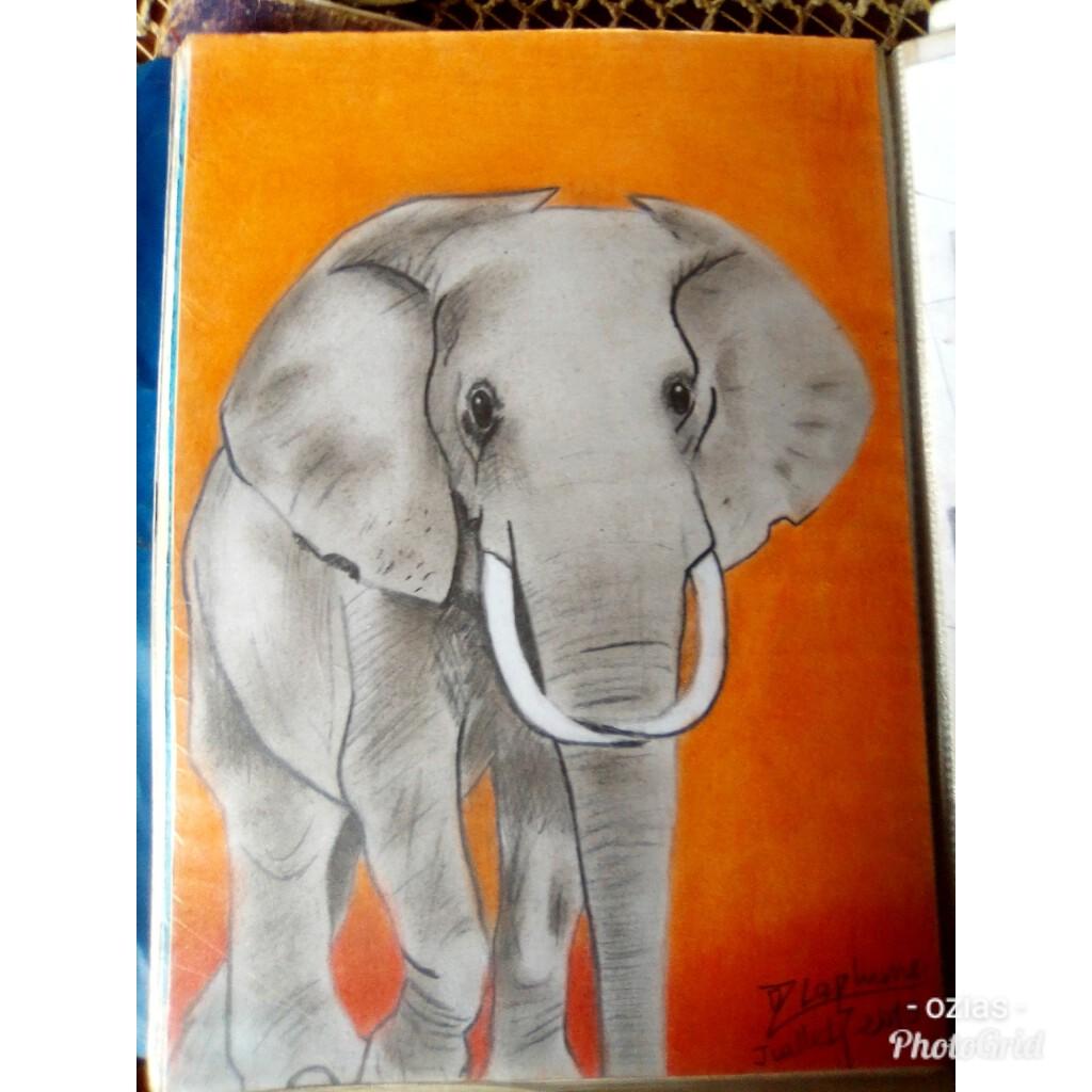 Animal d'Afrique