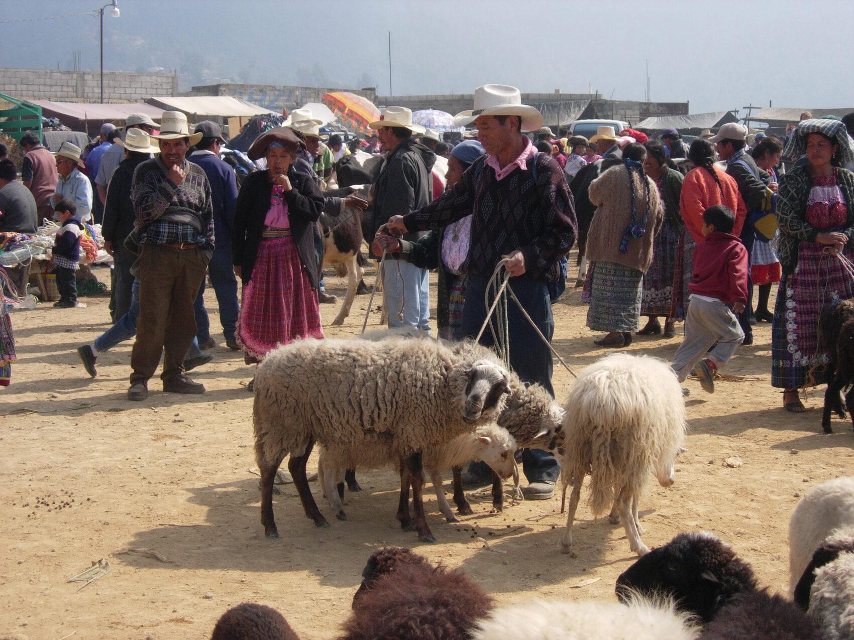 marché au bestiaux