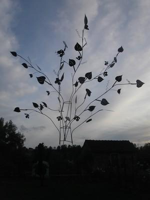 arbre tremblant