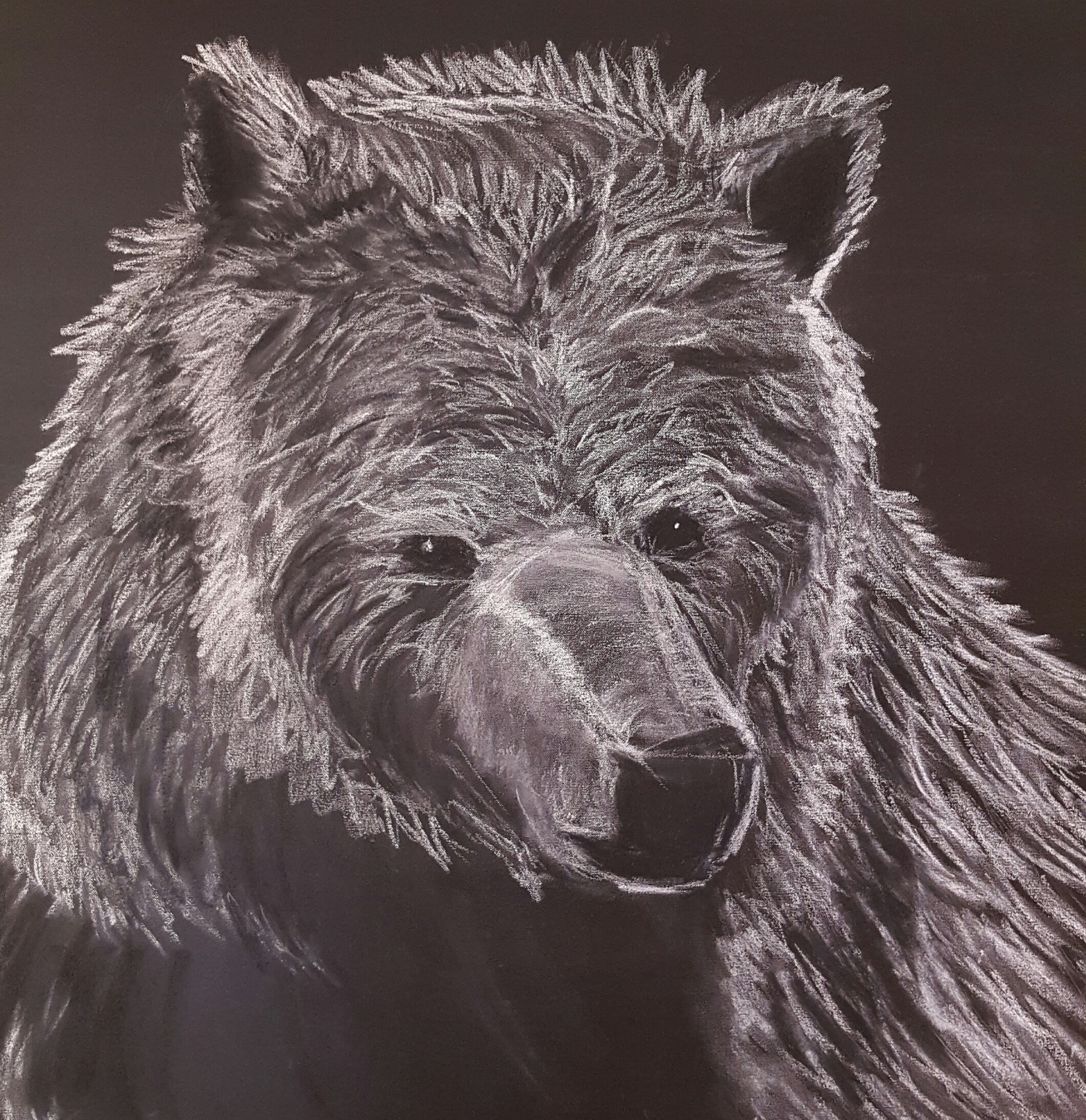 L'ours