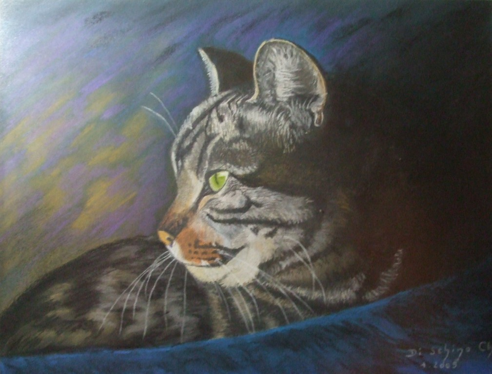 Chat à la couverture bleue 2 (50x40)