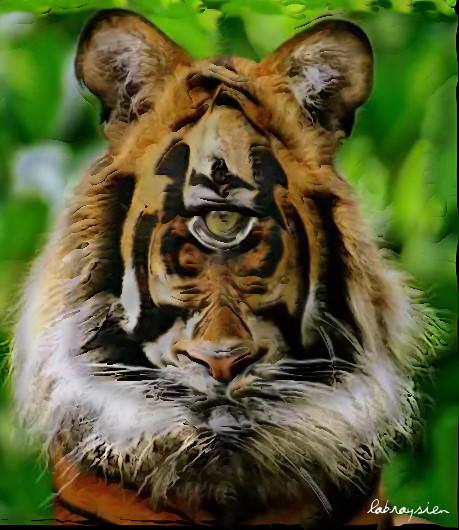 Tigris habet oculus