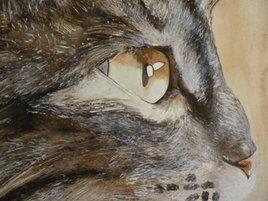L'oeil du chat (version 2)