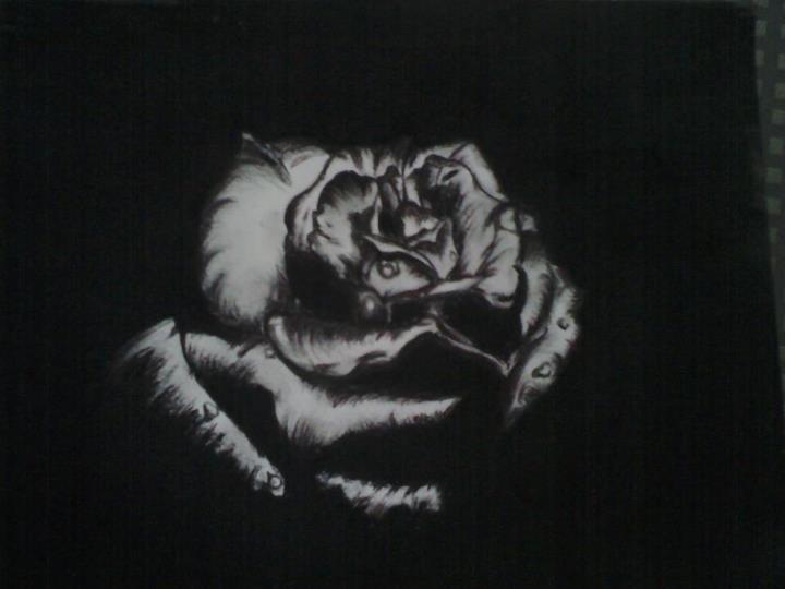 Dessin dessin rose - Dessin fond noir ...