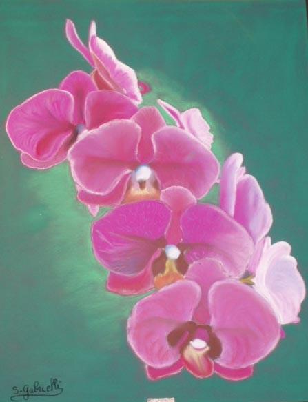 Dessin branche d 39 orchid e - Dessin d orchidee ...