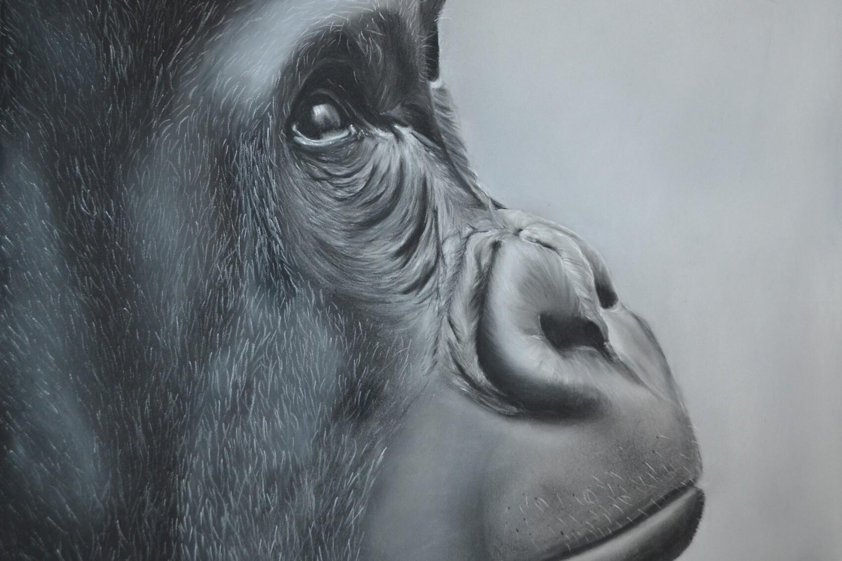 Gorille aux pastels secs