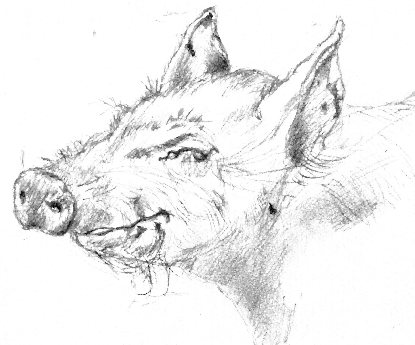 H1 N2 Cochon qui s'en dédit!