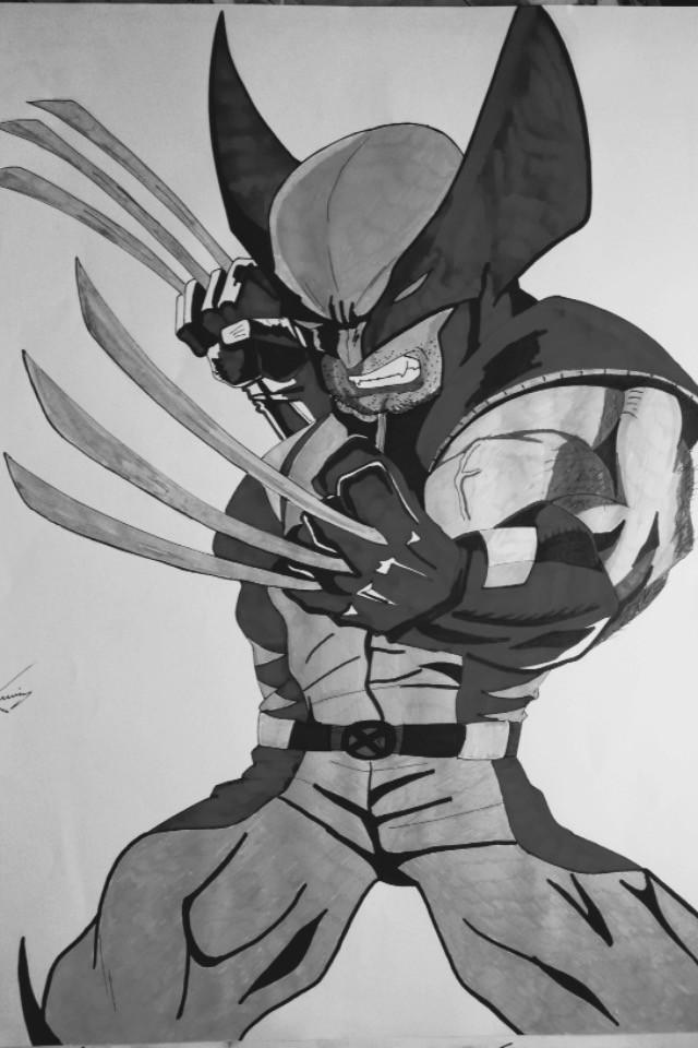 Dessin Wolverine
