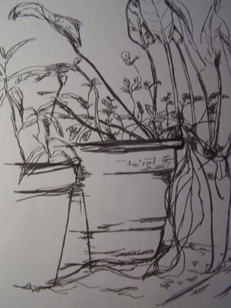 Botanique3.