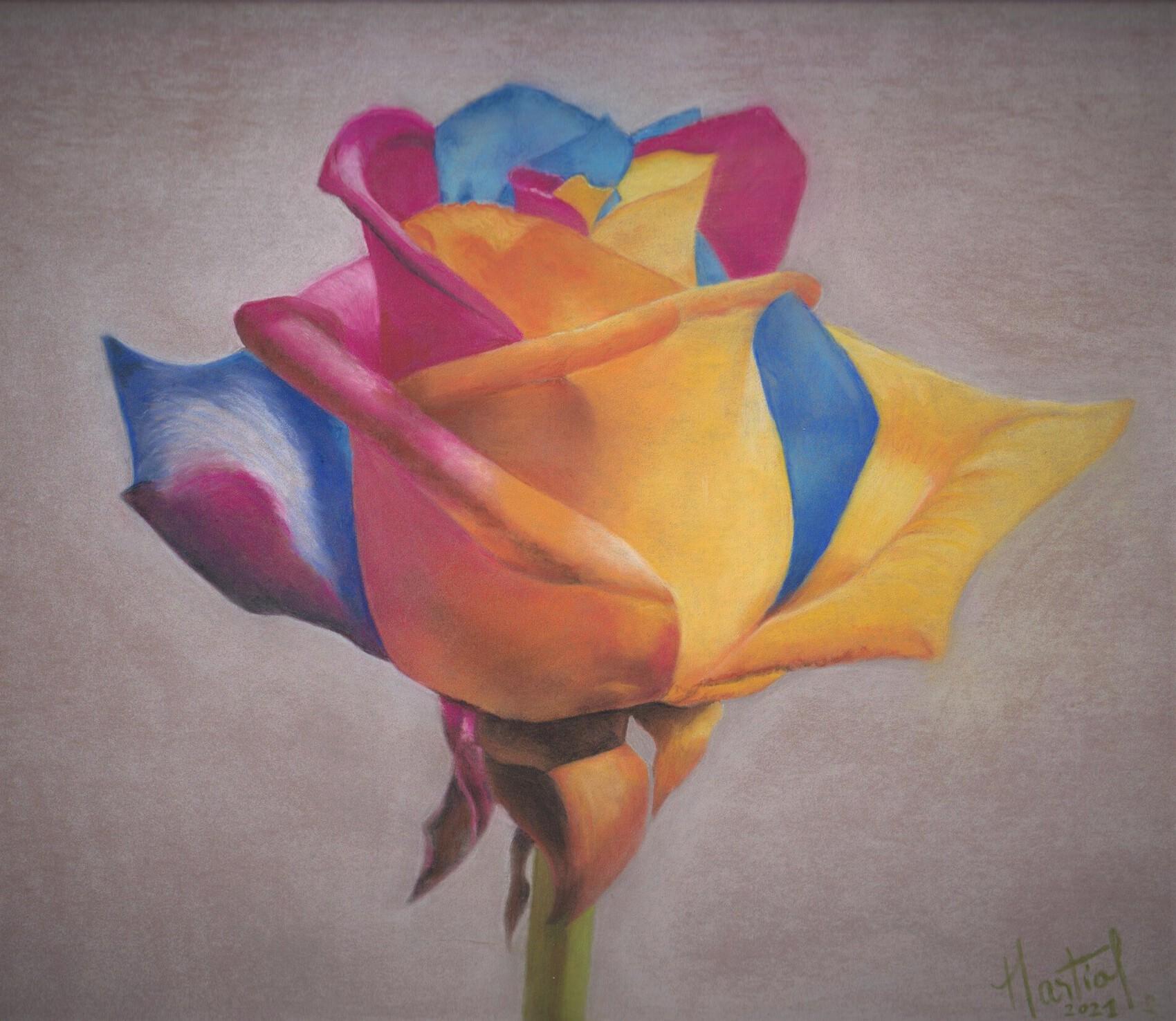 Rose aux pastels