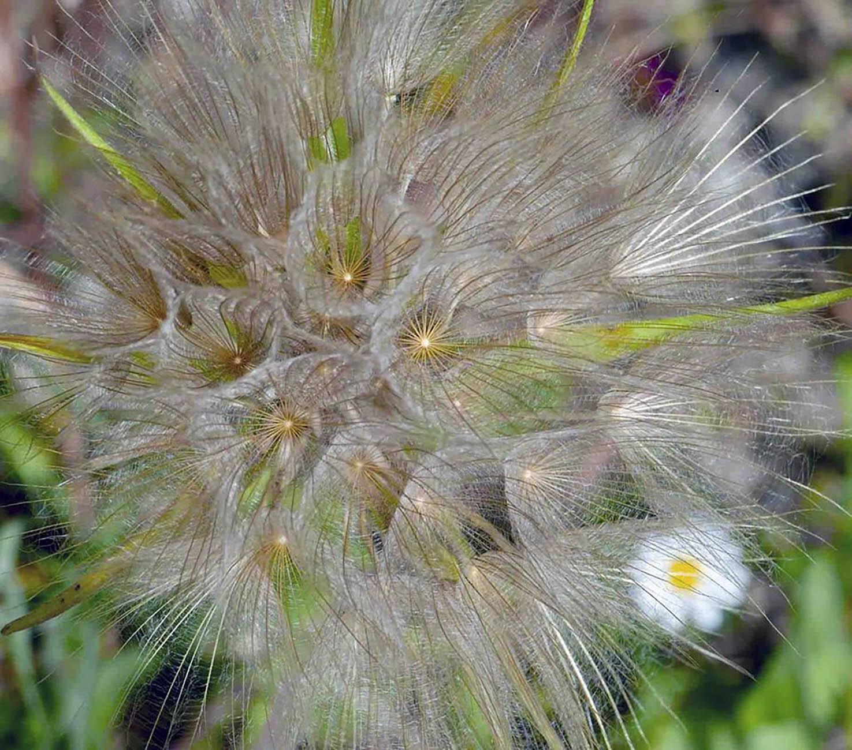 Plante insolite - Le fichier 20€ - Tirages tous formats voir mon site sur mon profil