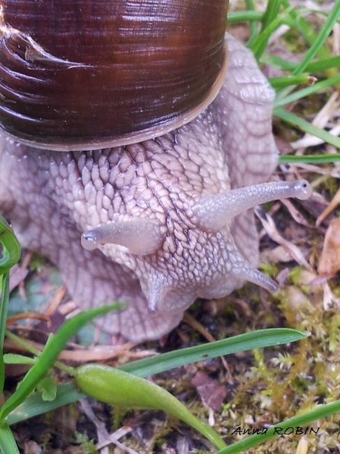 Photo petit escargot porte sur son dos sa - Parole petit escargot porte sur son dos ...