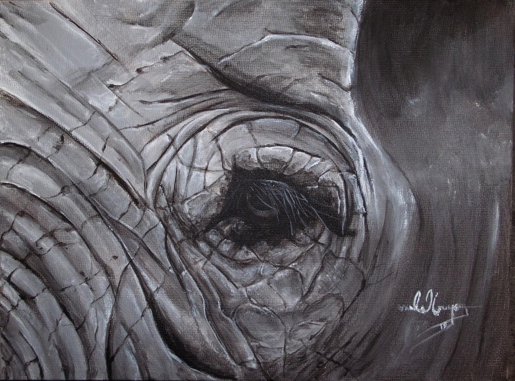 œil d'éléphant