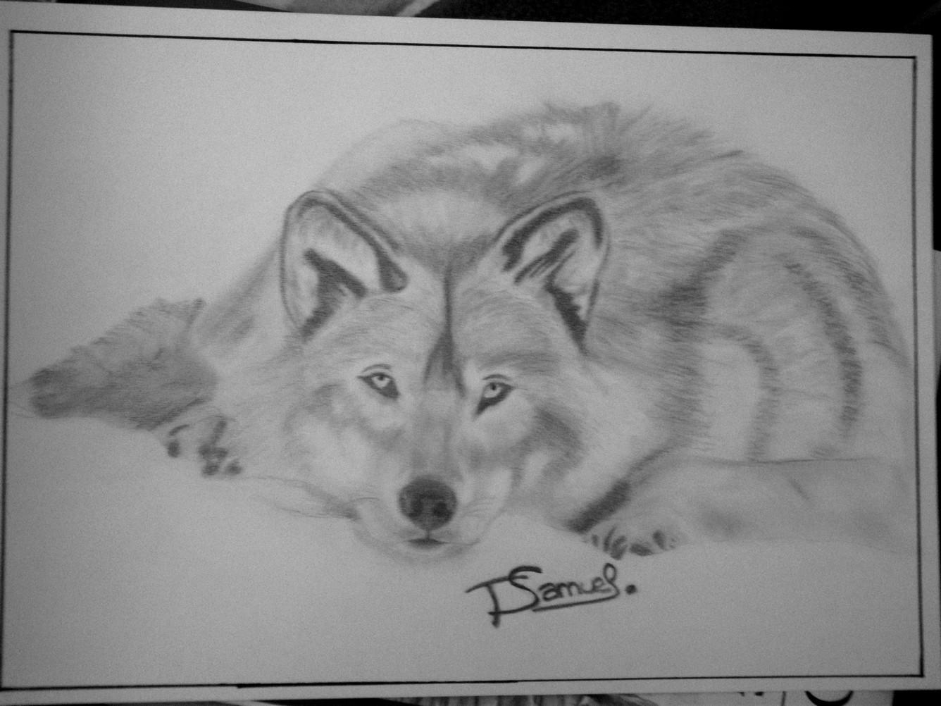 Dessin loup dans la neige - Loup a dessiner ...