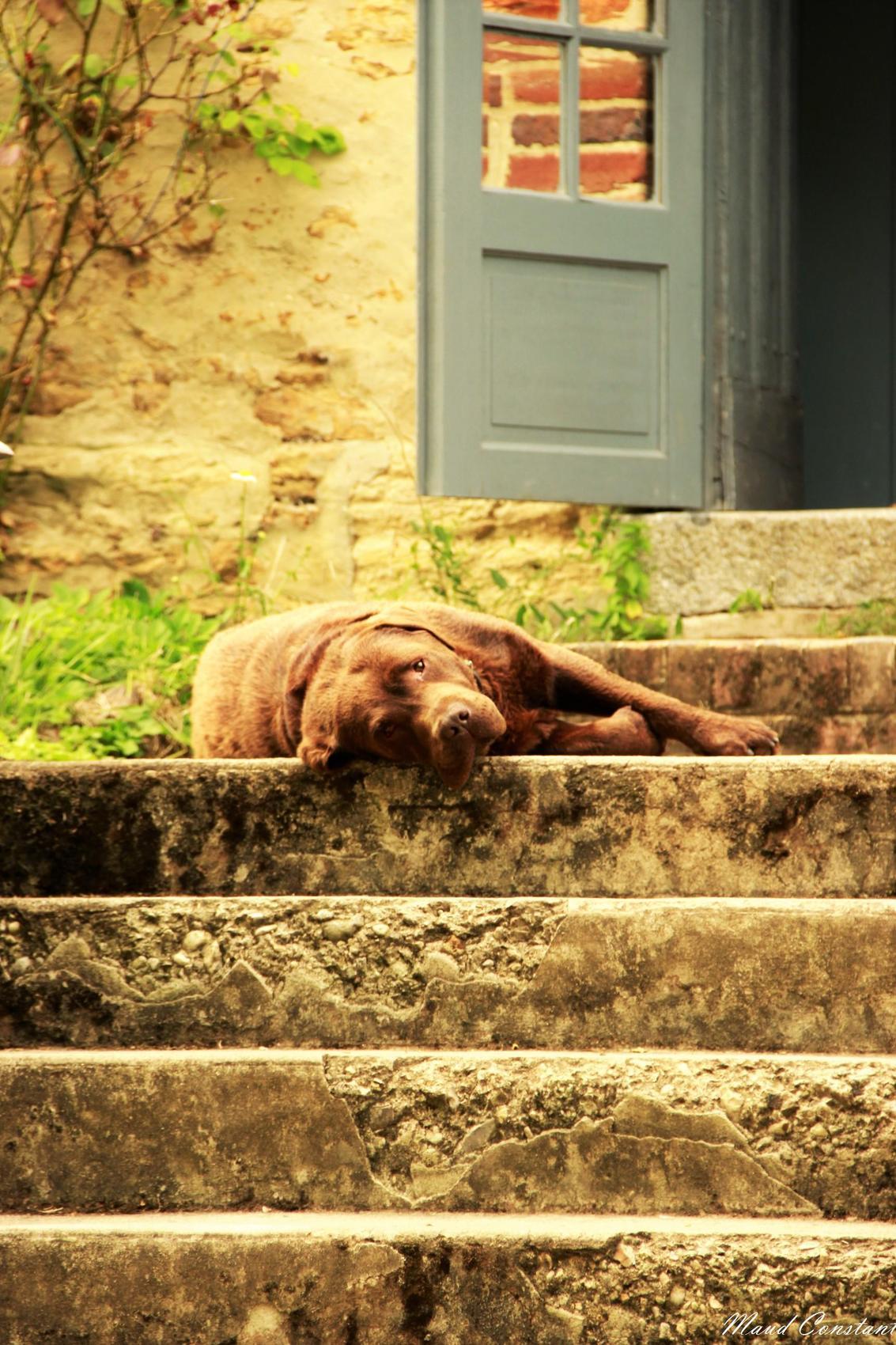 mélancolie canine