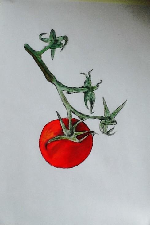 Dessin grappe de tomate observation - Dessin de tomate ...