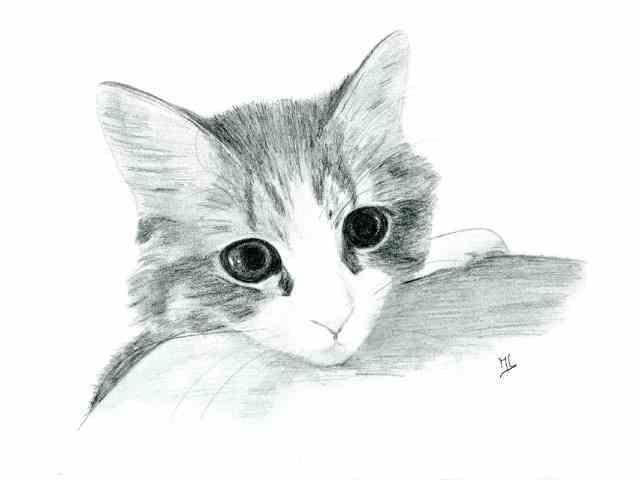 Dessin chaton - Chat dessin noir et blanc ...