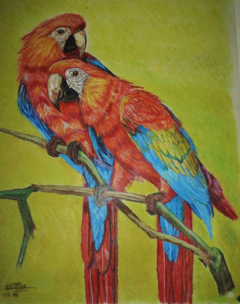 Peinture perroquets - Perroquet en dessin ...