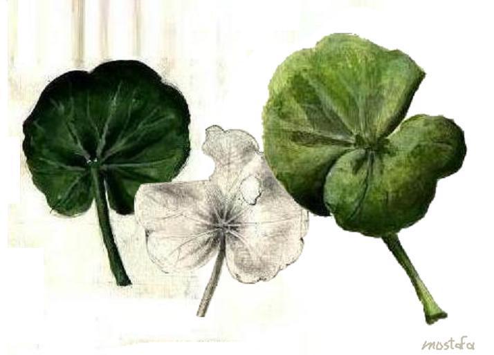 Peinture feuilles de plante for Plante 7 feuilles