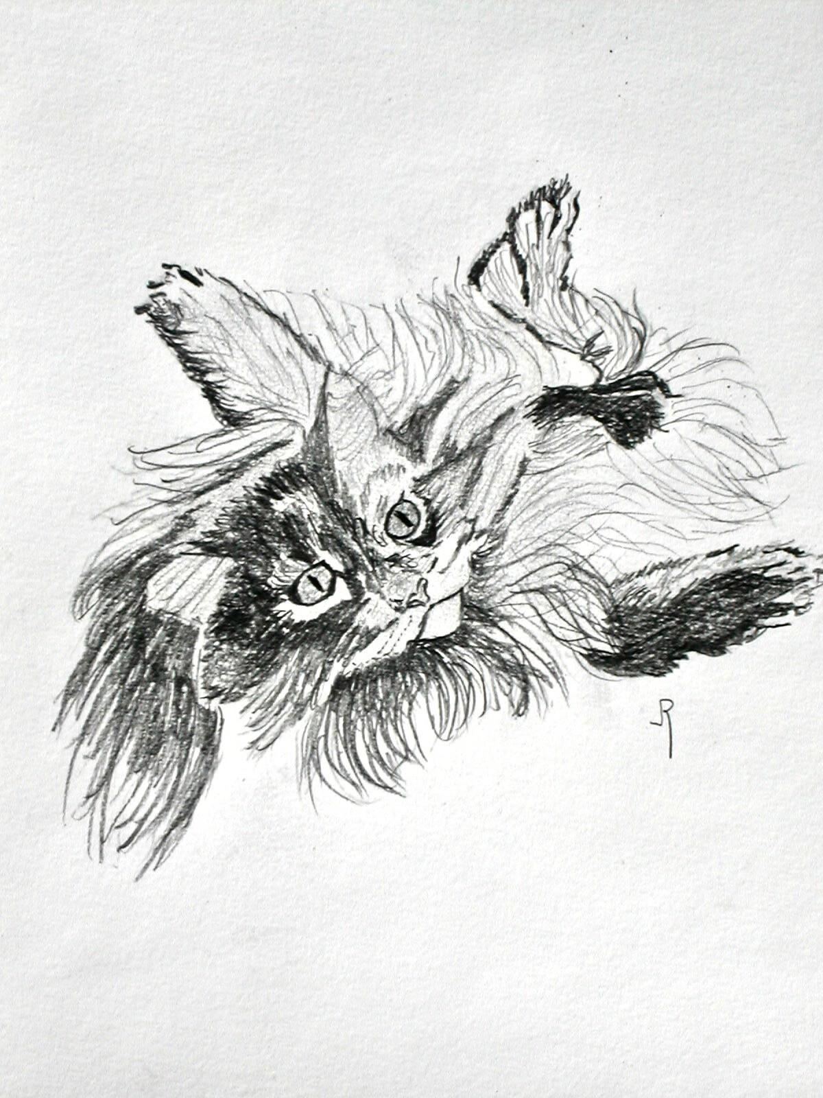 Chat chiffonné