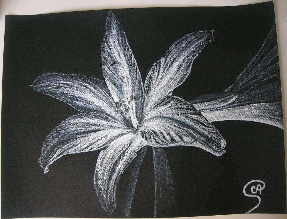Pin render fleurs lys nature autresinconnu png image sans fond on pinterest - Dessin fleur de lys ...