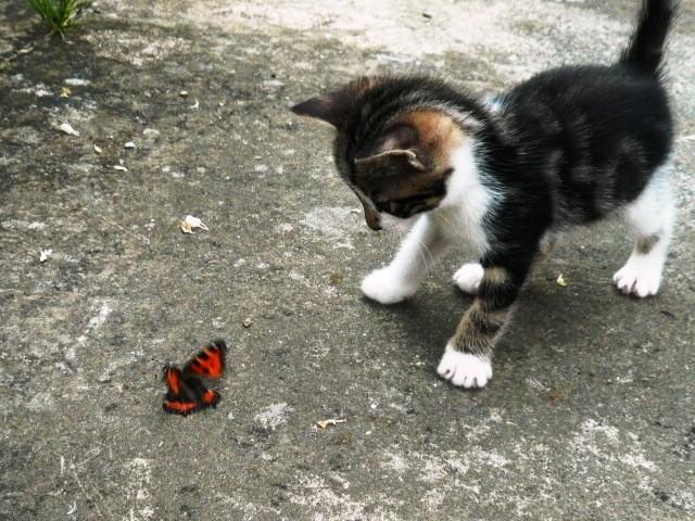 Miss Butterfly...