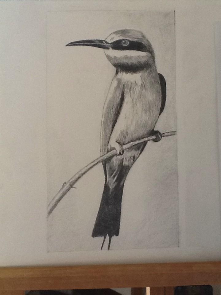 oiseau martin pêcheur