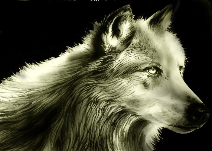 Dessin loup - Un loup dessin ...
