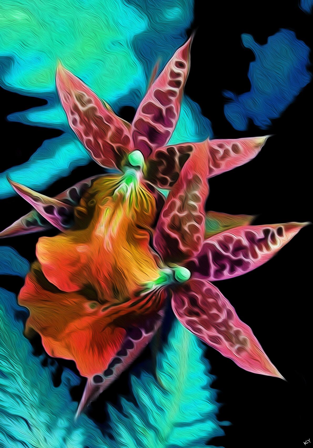 Orchidee Strange