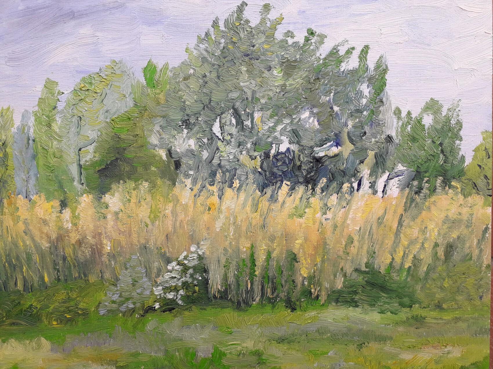 paysage, prairie et roseaux au printemps