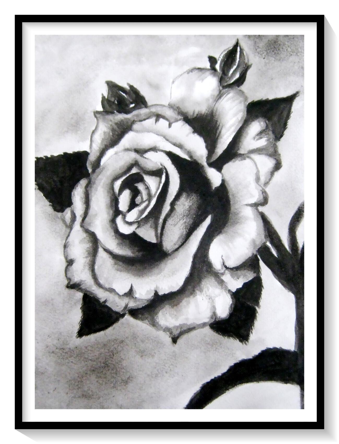 Rose Nuage