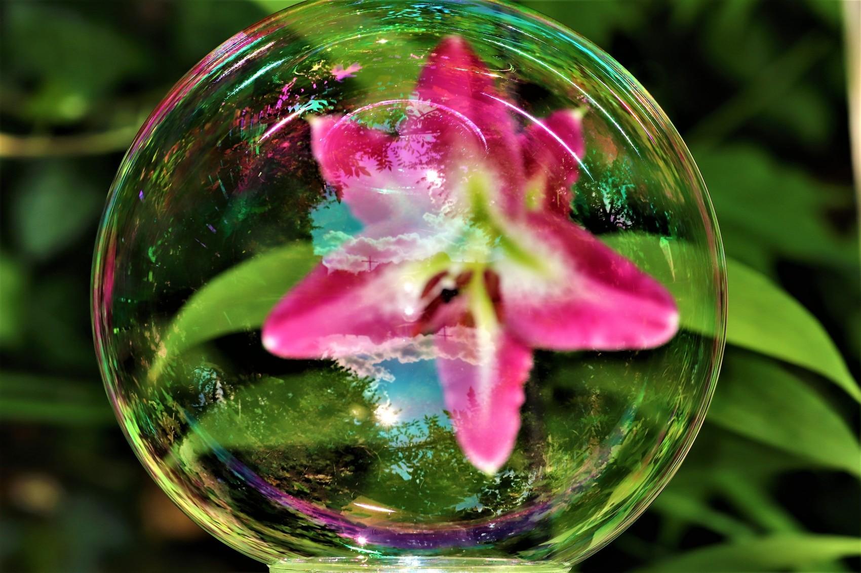 Fleur de Lys prisonnière dans une bulle !!