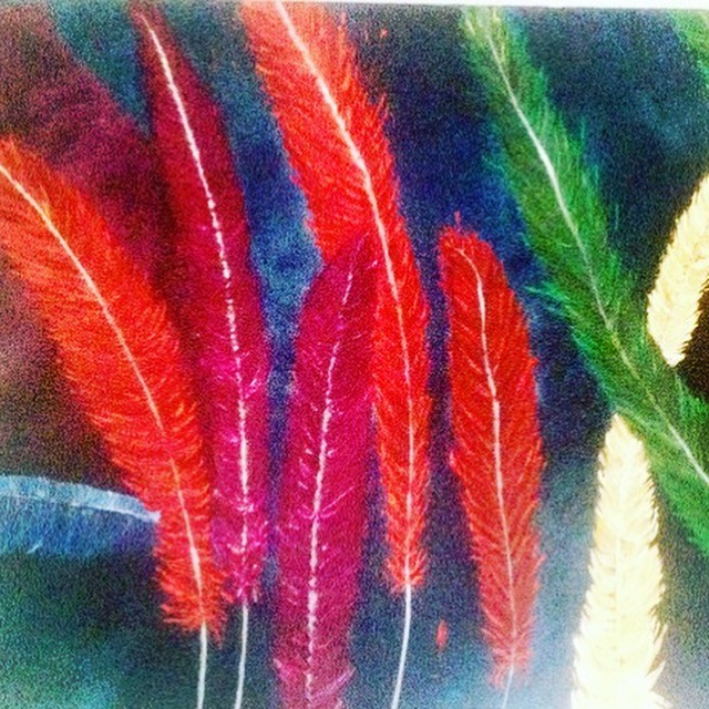 Poids plume by Adriana Casca