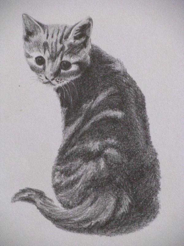 Dessin chat - Dessin chat assis ...