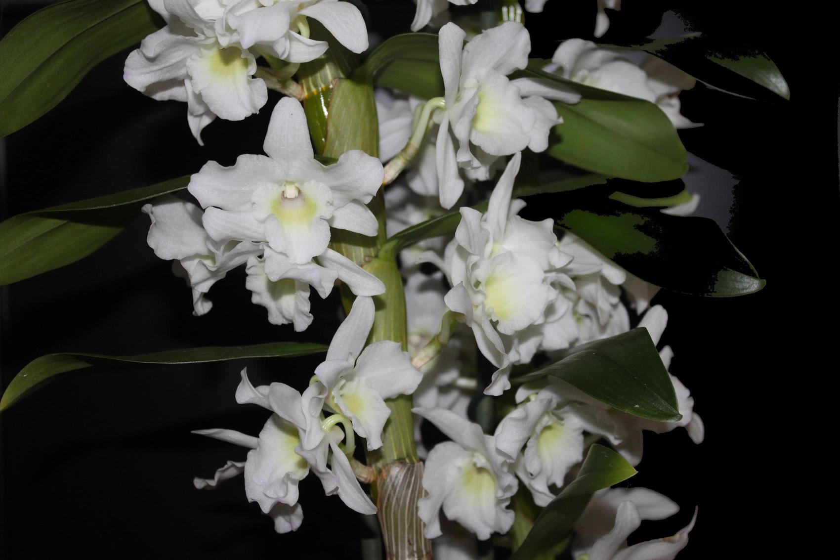 photo orchid e bambou. Black Bedroom Furniture Sets. Home Design Ideas