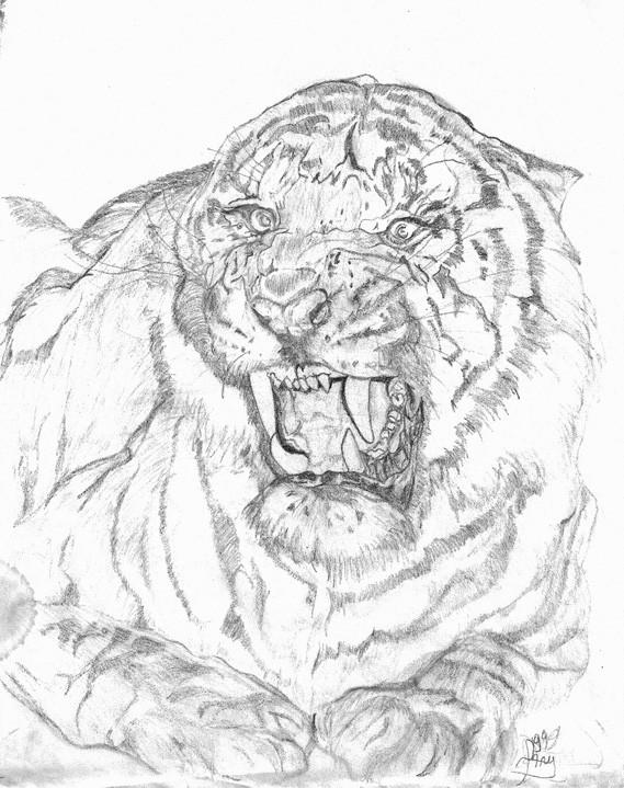 Dessin t te de tigre - Trop beau dessin ...