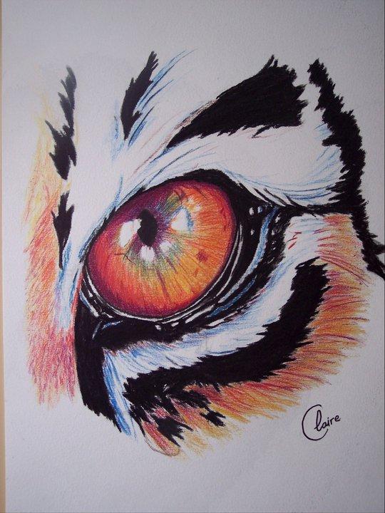 Dessin oeil de tigre - Dessin de tigre facile ...