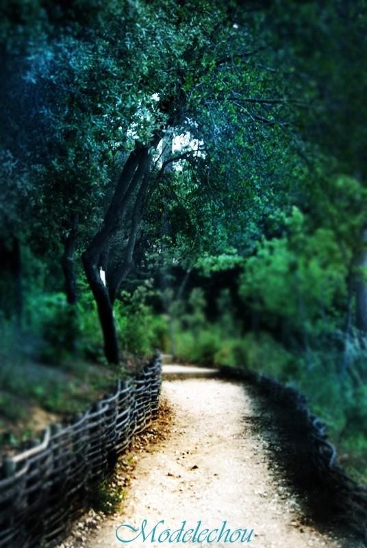 chemin solitaire