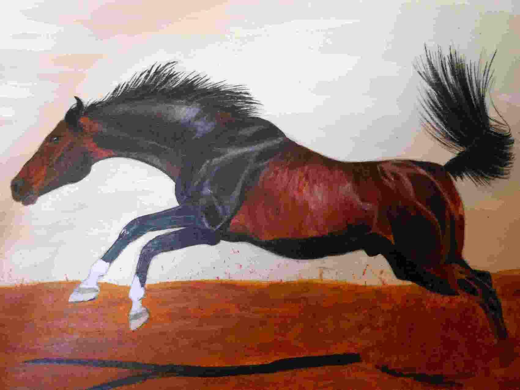cheval baie brûlé au galop