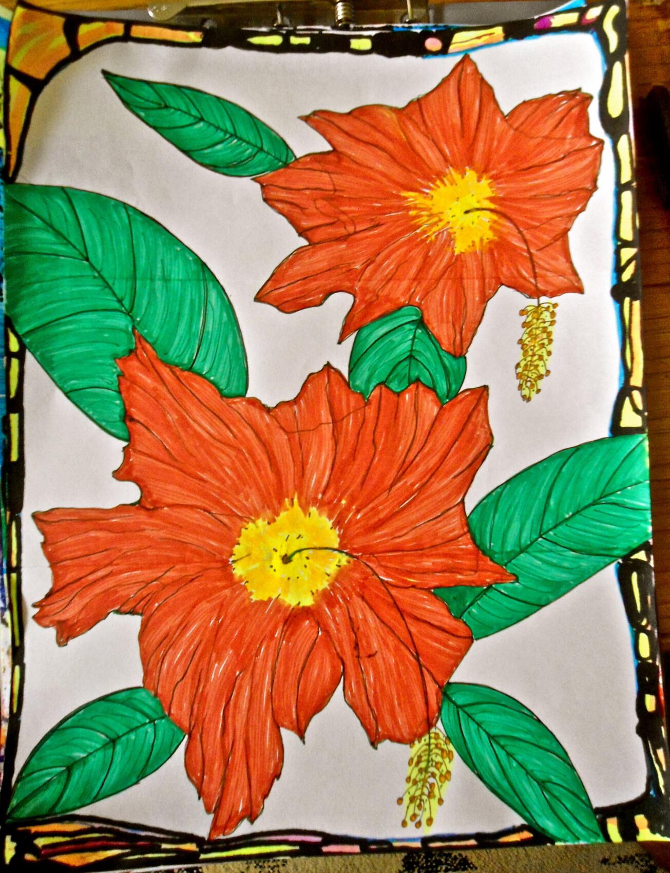 hibiscus floridien