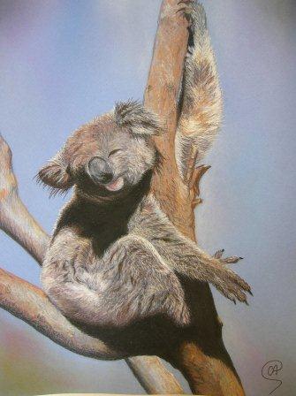 Peinture Koala - Peinture Animalière Au Pastel