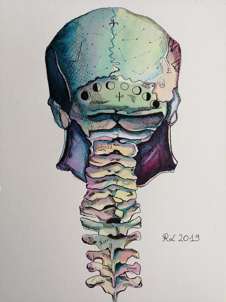Crâne arrière